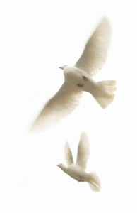 Op vleugels gedragen